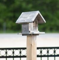 Cedar Bird Houses